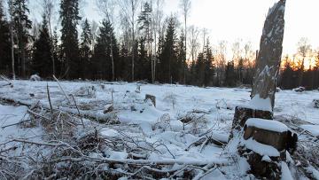 Несколько месяцев назад Медведев принял решение приостановить строительство трассы Москва-Санкт-Петербург через...